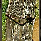 """""""Old Fence Post and Rusted Wire""""... prints and products by © Bob Hall"""