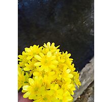 Yellow Flower Bouquet  Photographic Print