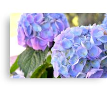Purple Blue Hydrangeas Canvas Print