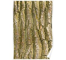 Tree Bark Texture Vertical Poster