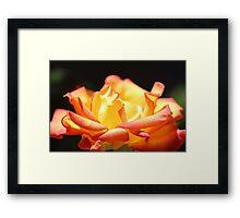 Rose For My Mum Framed Print