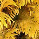 Golden Fern Leaves by kenspics