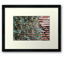 Green and Red - Cypress Branches Over Antique Roman Brick Wall Framed Print