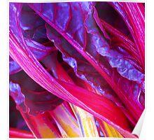 Rhubarb in Purple Poster