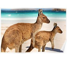 Mother and baby kangaroo on the beach Poster