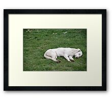 Sleeping White Framed Print