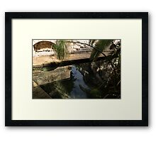 Mythical Arethusa - Wild Papyrus and Frieze Reflections Framed Print
