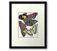 TIR-Butterfly-7 Framed Print