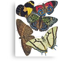 TIR-Butterfly-7 Canvas Print