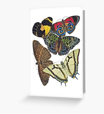 FF - Butterfly-7 Greeting Card