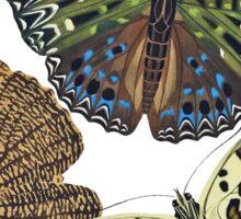 FF - Butterfly-7 Sticker