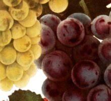 Vintage - TIR-Grapes-2 Sticker