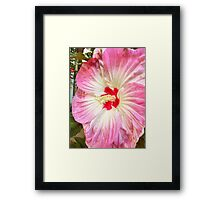 Orchid in Pink and White Framed Print