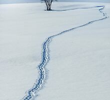The Path to the Horizon by Angelika  Vogel