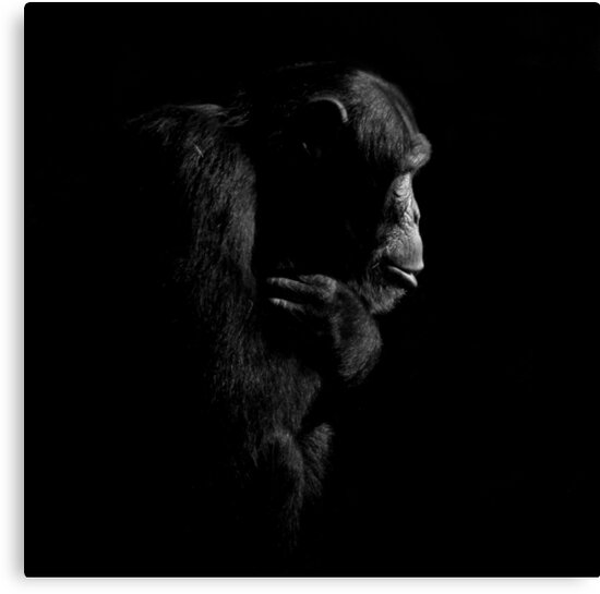 Primate Portraits ~ Part One by artisandelimage