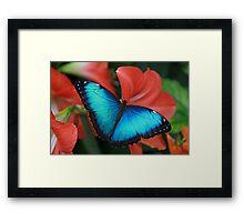 Blue Morph Framed Print