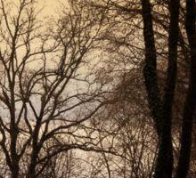 forest in winter Sticker