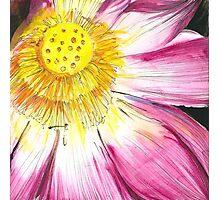 Lotus Flower Photographic Print