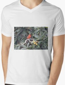 Cardinal in a Fruit Tree Mens V-Neck T-Shirt