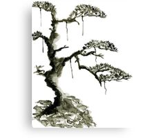 Chinese pine, a symbol of longevity Canvas Print