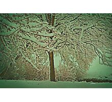 Morning Snow Photographic Print