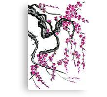 Pink flowers of sakura Canvas Print