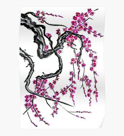 Pink flowers of sakura Poster