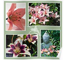 Lily Photo Collage  Poster