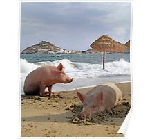 Pigs at the beach in Mykonos Poster