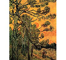 'Pine Trees Against A Red Sky with a Setting Sun' by Vincent Van Gogh (Reproduction) Photographic Print