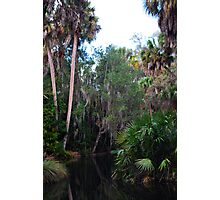 Water Jungle Photographic Print