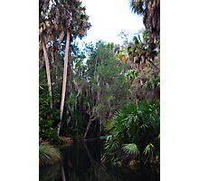 Water Jungle Photographic Print