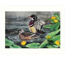 Wood Duck Pair Art Print