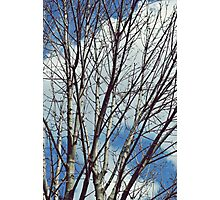 Tree Branches Photographic Print