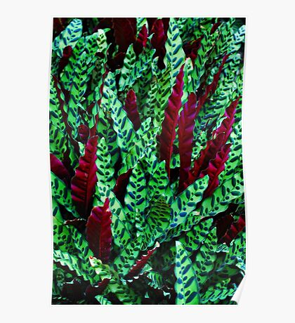 Green & Red Leaves Poster
