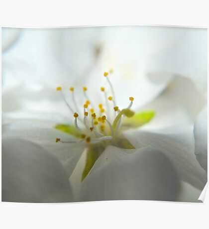 Whimsy Bloom Poster