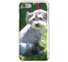 'ALERT! & BORED!' Two four footed friends. Semaphore Esplanade. iPhone Case/Skin