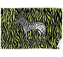 Zebra - animal colour pop art Poster