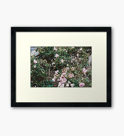 Blooms (San Francisco) Framed Print