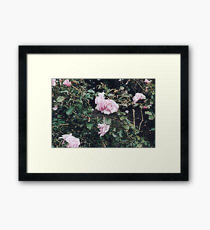 Blooms No.2 (San Francisco) Framed Print