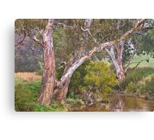 Painted Rivergums Canvas Print