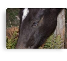Dark Brown Horse Close Up Shot  Canvas Print