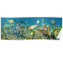 Coral reef marine life underwater panorama Poster
