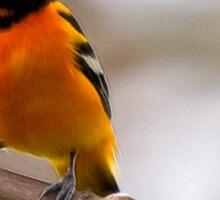 Northern Oriole - Bird Lover Sticker