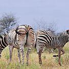 Zebra Foal by Ludwig Wagner