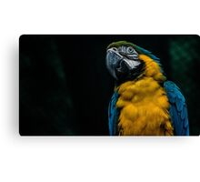 blue and yellow Macaw Canvas Print