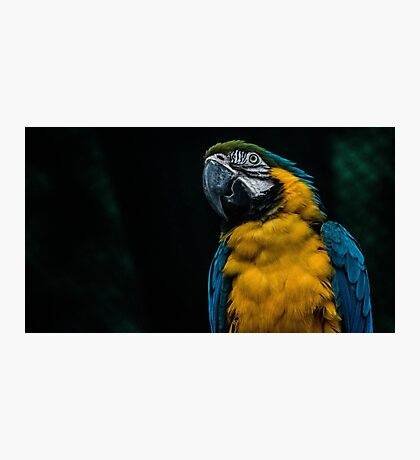 blue and yellow Macaw Photographic Print