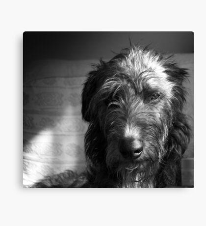 Monochrome Deerhound  Canvas Print