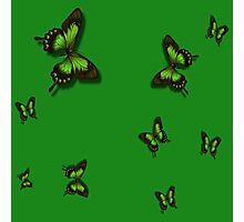 Green Butterflies Photographic Print