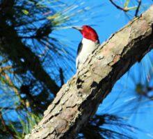 Red Headed Woodpecker Sticker